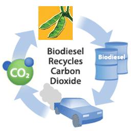Круговорот биодизеля в природе
