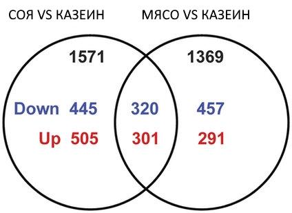 Анализ дифференциальной экспрессии генов в печени двух групп крыс (относительно контрольной) показали значительные отличия – растительноядные-животные и крысы-мясоеды отличались от контрольной группы по экспрессии 1571 и 1369 генов. Рисунок: Shangxin Song et al., 2016